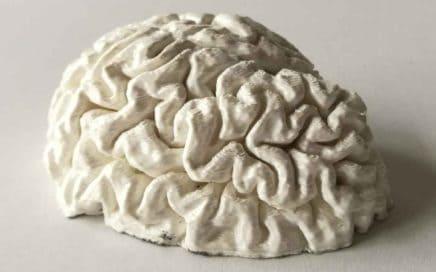 mózg 3d, wydruk 3d mózgu, druk 3d podstawowe pojęcia, słownik pojęć